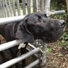 超大型犬のトレーニング可能な飼育者さんを募集中 サムネイル4