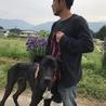 超大型犬のトレーニング可能な飼育者さんを募集中 サムネイル6