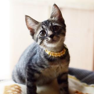 正統派美猫【波暖】