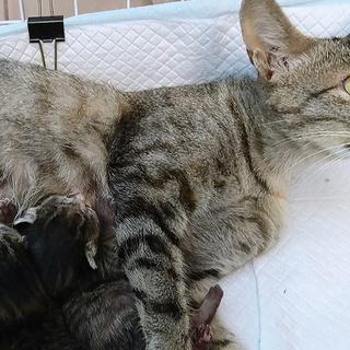 ママ猫ちゃんと子猫ちゃん4匹里親募集①