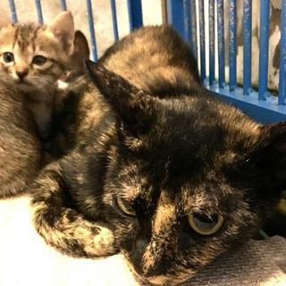 子猫5匹のお母さん猫サビちゃん