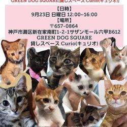 ガーディアン犬猫譲渡会  神戸グリーンドック