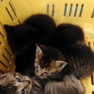 野良猫の赤ちゃん 2匹
