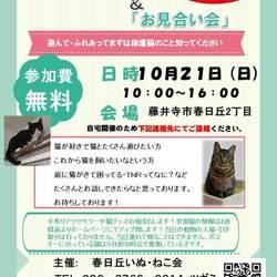 藤井寺市 猫のふれあい会&お見合い会