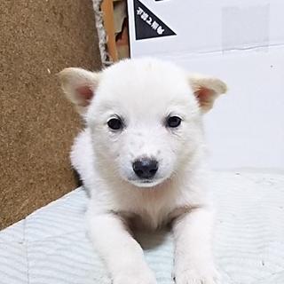 保健所救出犬!里親様緊急募集!!