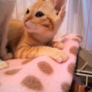 ☆懐っこい美猫姉妹☆③