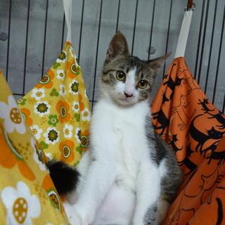 抱っこされ上手なスリスリ子猫