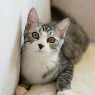 人馴れバッチリの美猫ファミリー