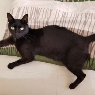 べったり甘えん坊な美黒猫!