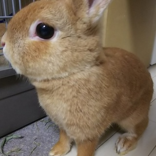 メスウサギのミカンです♪