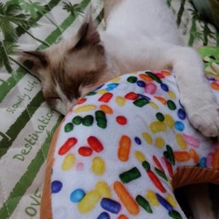 (急募)甘えてくる可愛い猫ちゃん