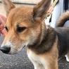 【助けて下さい❗️】かわいい子犬です!
