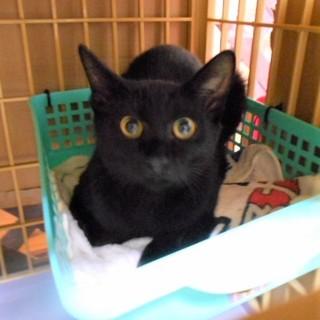 慣れ慣れ黒猫 ♪ リン君 5ヵ月