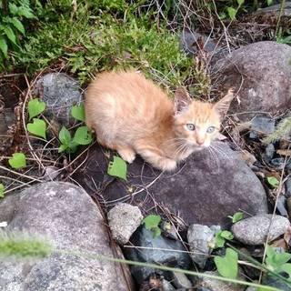 3ヶ月くらいのとても可愛い子猫ちゃん!