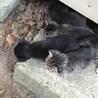 4匹の赤ちゃん猫の里親様