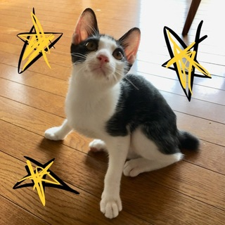 動画見て下さい‼️可愛い子猫達です(=^x^=)