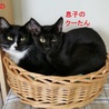 11/11水道橋★クーたんくん★ツヤツヤ黒猫くん サムネイル4