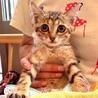 緊急!母猫とはぐれた野良の子猫、ヒトミちゃん