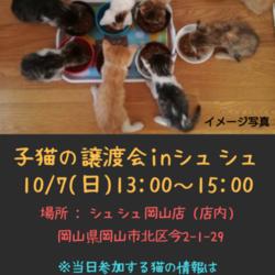 子猫の譲渡会inシュシュ岡山店