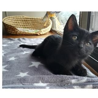 (大津市)元気な黒猫 イケニャンのノワくん!