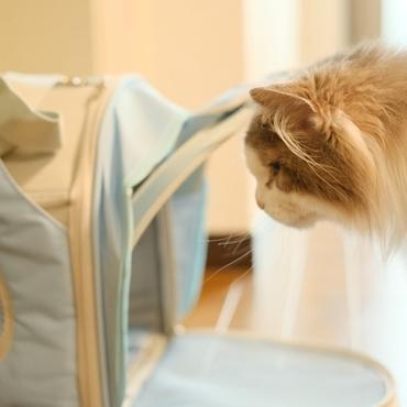 仔猫が来て威嚇するおばあちゃん猫