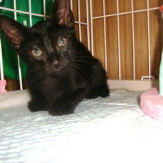 黒猫2匹 無責任なドタキャン