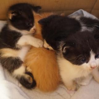 本当に可愛い子猫4兄弟です