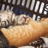 産まれて2週間!子猫3匹
