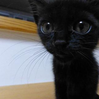可愛い真っ黒な子猫ちゃんです!