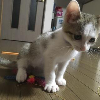 大分市 子猫オス 2ヶ月 ワクチン済