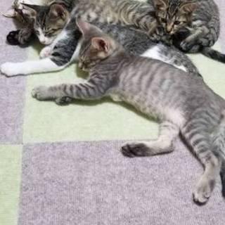 7月11日生まれのオス3匹とメス1匹の4兄妹です❗
