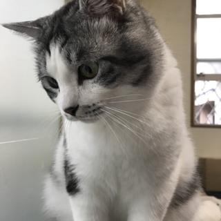 美猫レオくん推定3歳