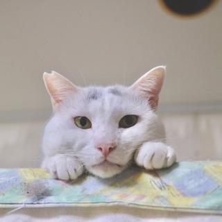 【ひこまろ】麻呂まゆ柄男子!