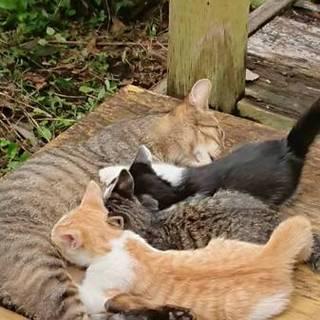 猫ちゃん達の家族になりませんか?