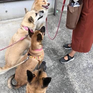 Edとお友達の元野犬たちのモグモグタイム