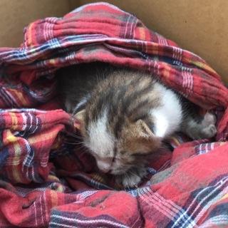 保護猫です。とても小さいため経験のある方希望です。