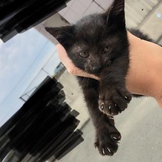 人懐っこい元気な黒猫ちゃんです。