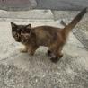 母猫に捨てられて愛求む猫