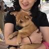 沖縄生まれ、シェパードmixの仔犬(2ヶ月)