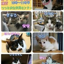 台風のため中止とします 猫の譲渡会 三重県名張市