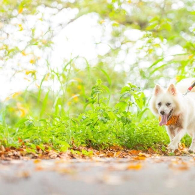 NPO法人 HAPPY DOG TEAMのカバー写真