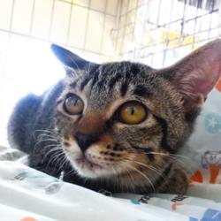 ▼猫の譲渡会▼名古屋市西区 サムネイル2