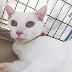 ▼猫の譲渡会▼名古屋市西区 サムネイル3