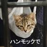 11/11水道橋★たぬきちゃん★おとなしめの女の子 サムネイル2