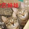 11/11水道橋★たぬきちゃん★おとなしめの女の子 サムネイル4