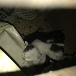 車庫で野良猫が子猫を産みました。