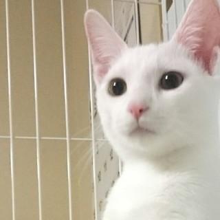 白猫女子「ようこ」元気すぎる冒険家!