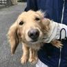 [かける]人は好きですが他犬は苦手。