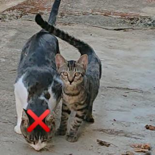 生後4ヶ月の子猫5匹の里親募集中です
