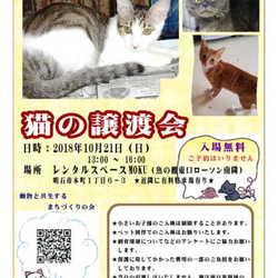 猫の譲渡会開催in明石